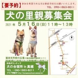 犬の合宿所in高槻の里親募集会
