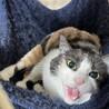 地域猫レスキュー♥️ゆず サムネイル3