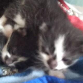 毒殺寸前に救出❗️猫一歳と産まれた仔猫5匹