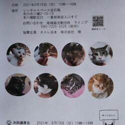 5/16 市川市地域猫活動団体ウイング譲渡会開催