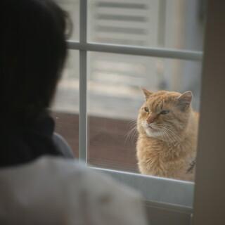 野良猫の男の子の里親さんを探しています。