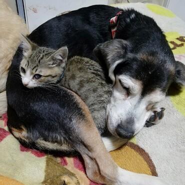 鈴々とヤマト♪犬と猫の親子♡