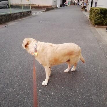 朝散歩♪朝焼けがきれいでした♪