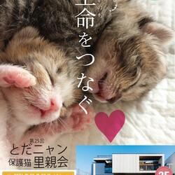 子猫祭りだよ~ とだニャン保護猫里親会 サムネイル1