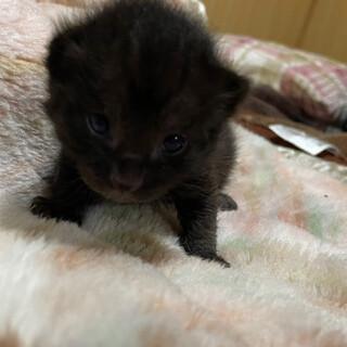 2021/05/01産まれの仔猫 7月頭にお引渡し