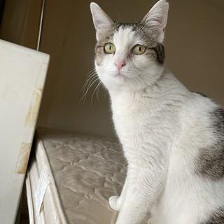 川原のりんご猫 ママ