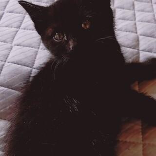 猫、黒メスオス、キジトラメス