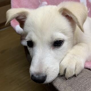 保健所からレスキューした子犬 シロ♀