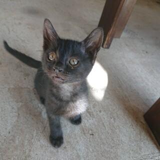 急募!黒猫8匹グレー1匹