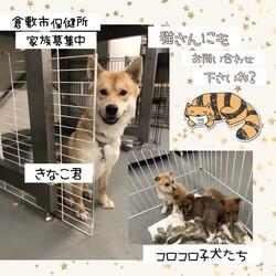 倉敷市保健所 収容犬猫譲渡会・見学会 サムネイル2
