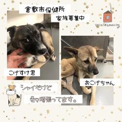倉敷市保健所 収容犬猫譲渡会・見学会 サムネイル3