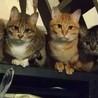 福岡市博多区より:残された5匹の猫