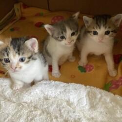 「保護妊婦猫が出産しました❗️」サムネイル2