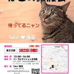 Sakai♥猫活 譲渡会