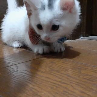 里親様決定・可愛い仔猫の兄弟です(^^)