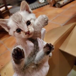 まだ小さい子猫を保護しています!