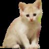 甘えんぼのひなたちゃん◎保護猫の里親募集中です!