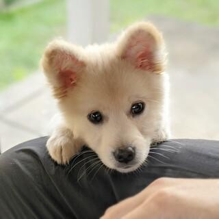 【仔犬】元気でかわいい女の子