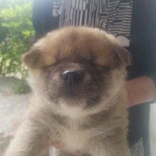 【仔犬】つぶらな目がとても可愛いです