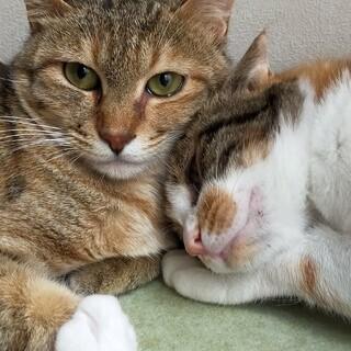 ●ペアでの募集●美猫姉妹!!「マリア」と「ステラ」