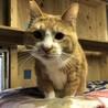 学校の保護猫、超癒し系で甘えん坊の『ナナ助』