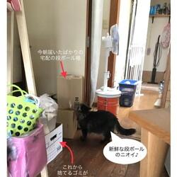 「プチ断捨離で猫空間を改良」サムネイル1
