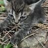 産まれて1ヶ月くらいの子猫