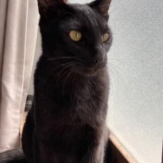 シャープな顔立ちでしなやかな動きの黒ネコくん