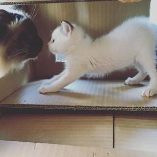 人間と猫ダイスキ甘えん坊シロちゃん