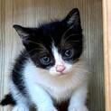 cat-M1009 ちびニャン可愛過ぎる♪