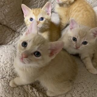 可愛い仔猫です。生涯大切にしてくれる里親さん募集