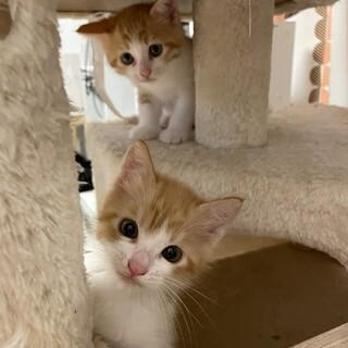 子猫と成猫