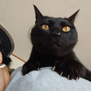 肩のり猫アルバくん♂