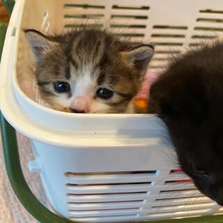 可愛い2匹の子猫