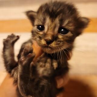 生まれたての子猫!問い合わせ多数のため一時中止。