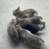 5/16(日)市川市地域猫活動団体ウイング譲渡会