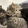 生後2ヶ月の子猫 サムネイル5