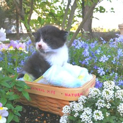 猫の譲渡会in豊明 ~ ちーむ にゃいんず 2021年5月22日(土)開催