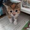 モフモフふわふわの4きょうだい+母猫2歳