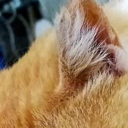 サクラ猫が妊娠かもサムネイル