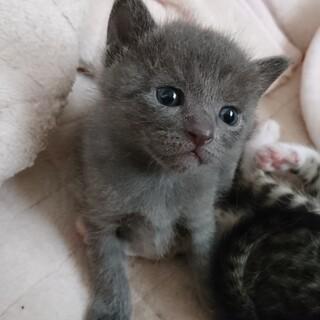 4月生まれの子猫の里親募集中!