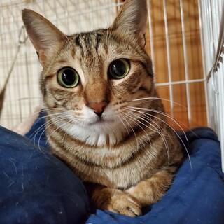淡路島の猫たち