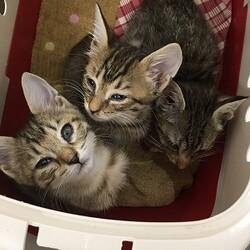 子猫3匹保護!