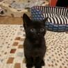 小さな 黒猫 リバーくん