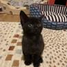 ありがとうございました★小さな黒猫リバーくん サムネイル2