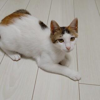 おっとりお姉さんの三毛猫♡