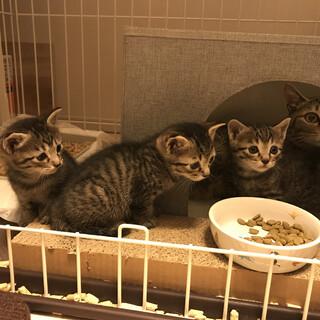 元野良猫ちゃんのママ猫と子猫の里親さん募集