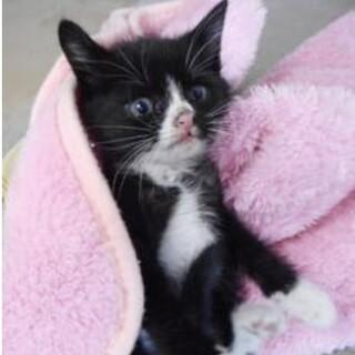 里親様を待っています。子猫1〜2ヶ月♀