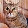 シャーシャー娘。猫とは仲良し