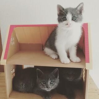 千葉県白井市/かわいい3兄妹です